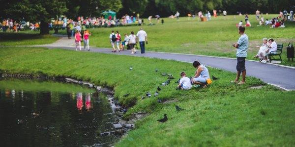Gołębie bardziej niebezpieczne niż kleszcze. Dlaczego nie wolno dokarmiać ich latem?