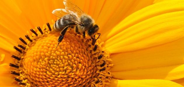 Łagodzenie bólu i obrzęku po ukąszeniach owadów